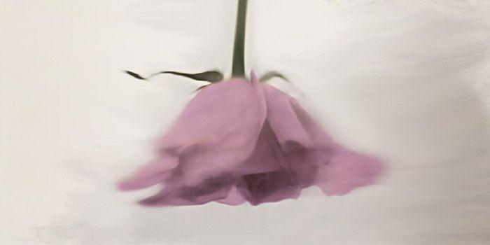 foto artistica flor rosa boca abajo bailando en fotografia accidental y artistica la fotografia es mi pasion