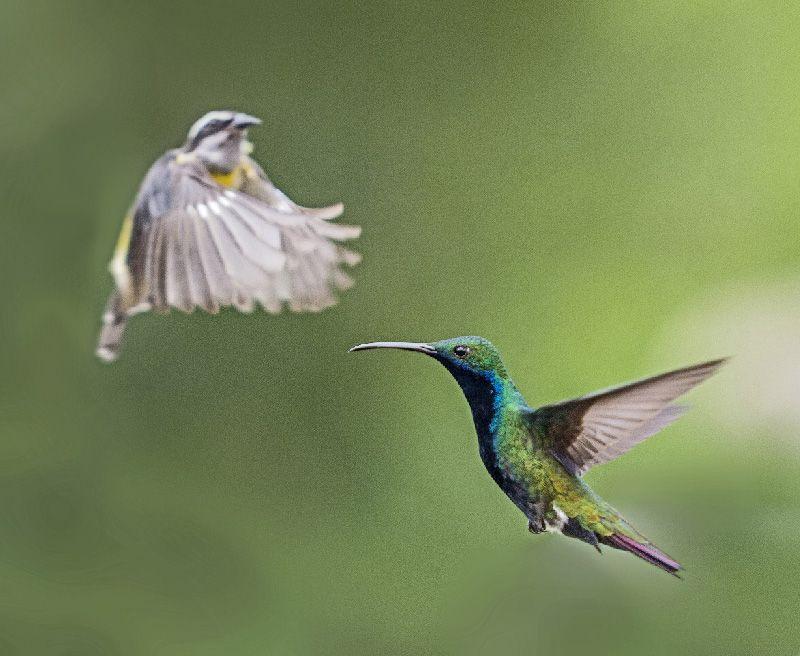 colibri en vuelo el tiempo en fotografia la fotografia es mi pasion