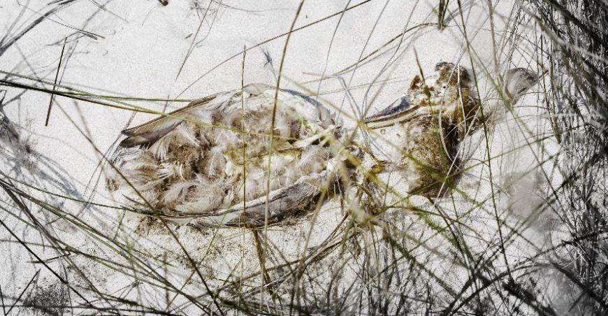 pato muerto en la arena entre ramas