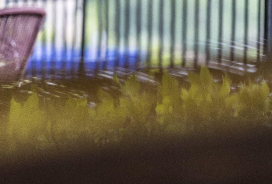 Fotografía artística de hojas y lluvia