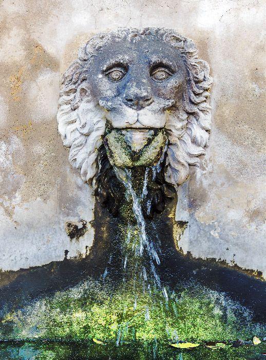 fuente cabeza de león con gotas de agua y verdín