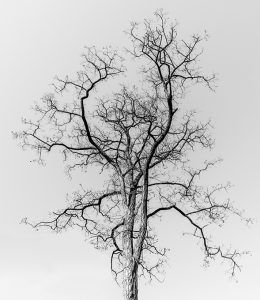 arbol desnudo en invierno copyright xisco fuster