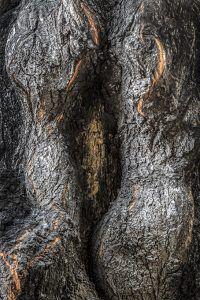 Foto artística de tronco que parece el sexo femenino