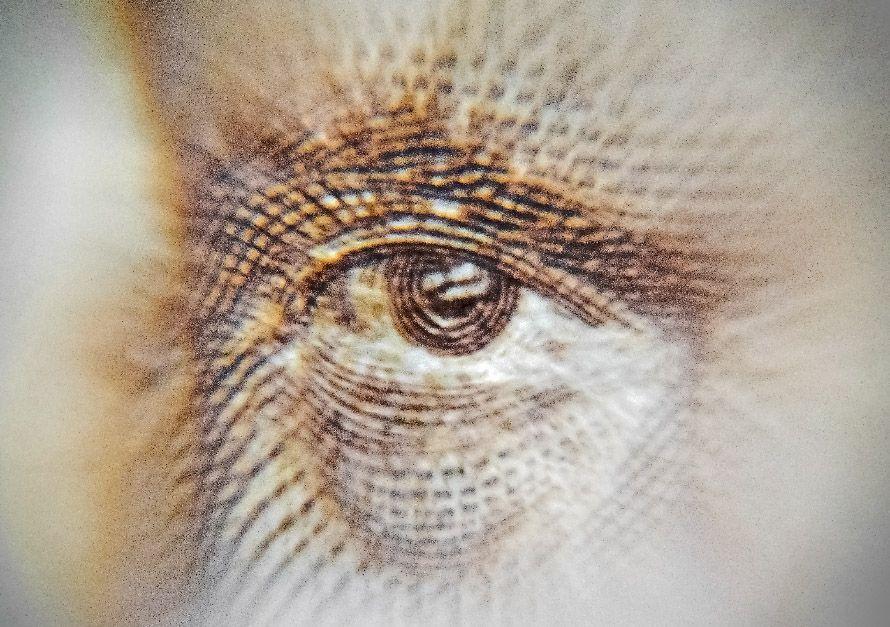 ojo de billete de 100 pesetas fotografía artística recomendaciones de fotografía