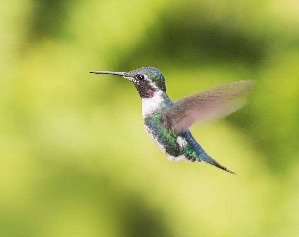colibri 2 xisco fuster fotografo la fotografia es mi pasion
