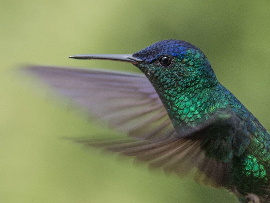 colibri 4 xisco fuster fotografo