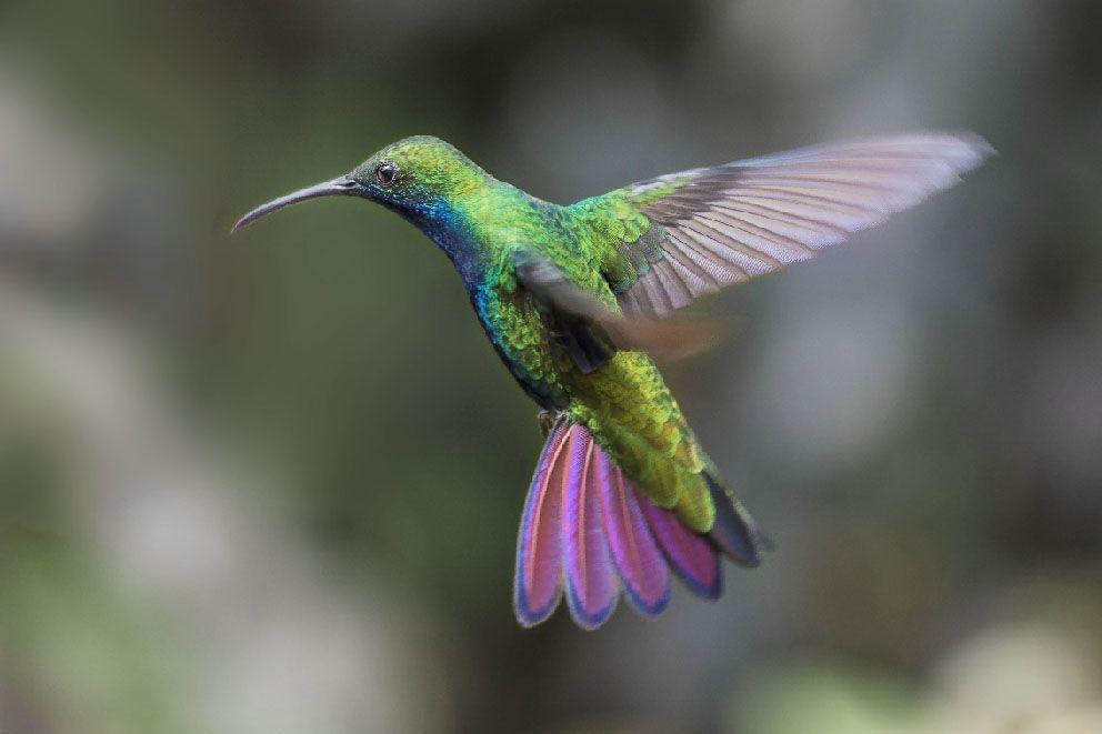 colibri xisco fuster fotografo