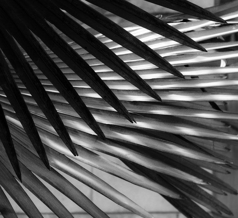 blanco y negro la fotografia es mi pasion