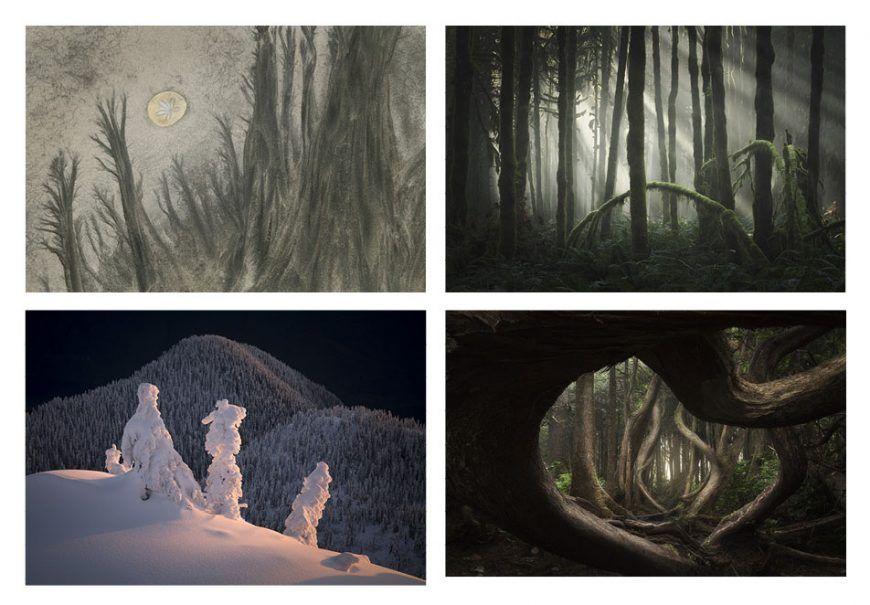 Adam Gibbs b la fotografia es mi pasion