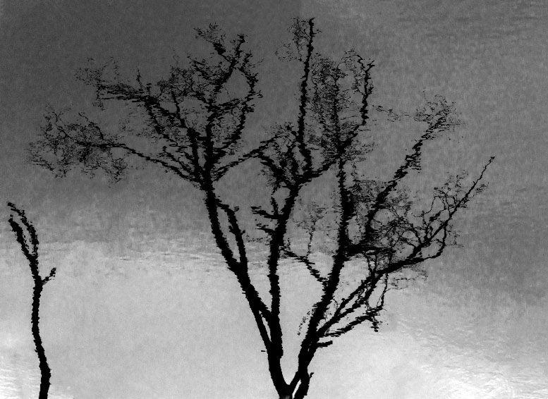 arbol sombra reflejo xisco fuster fotografo
