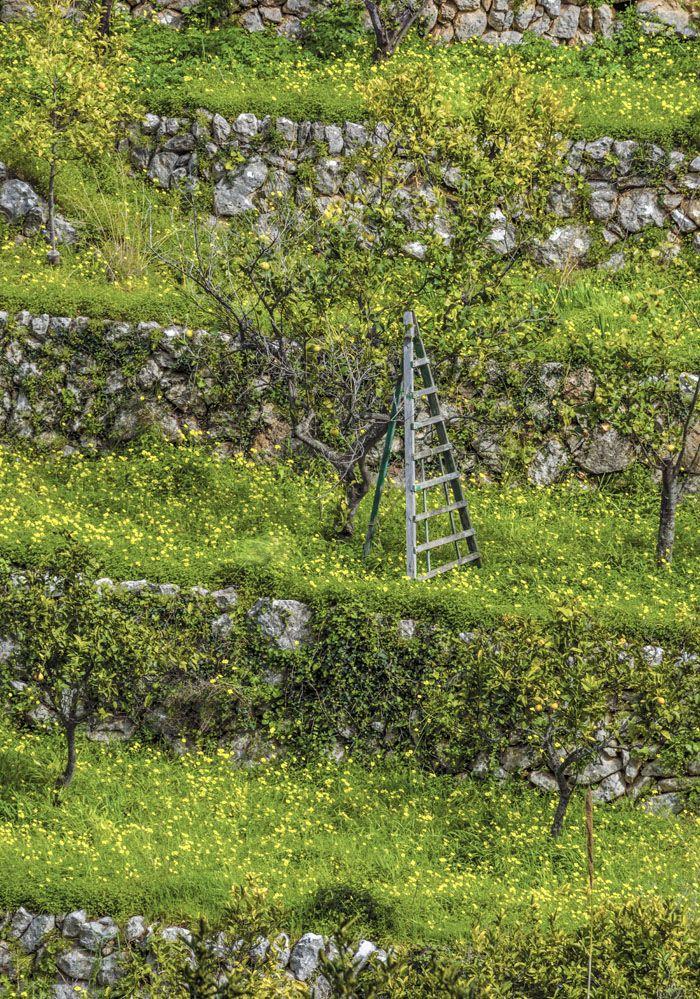 las oportunidades las creas tu escalera xisco fuster fotografo